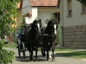 Toeren paard wagen