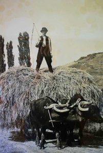 klein-balaton-buffelreservat-kapolnapuszta-04